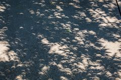 Crescant Shadows During The Great American Eclipse Stock Photography