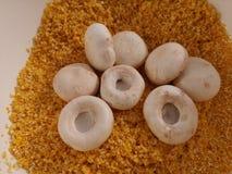 Cresce rapidamente o cogumelo na grão do milho esmagada foto de stock