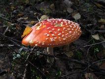 Cresce rapidamente o verão do outono da natureza da vegetação Imagem de Stock