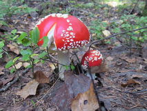 Cresce rapidamente o verão do outono da natureza da vegetação Foto de Stock