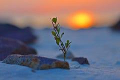 Crescendo al tramonto con le rocce e la sabbia immagine stock