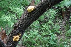 Crescendo sui funghi di un tronco di albero Immagine Stock