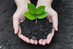 Crescendo uma árvore Imagens de Stock