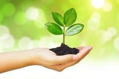 Crescendo uma árvore Imagem de Stock