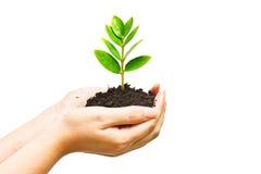 Crescendo uma árvore Imagens de Stock Royalty Free