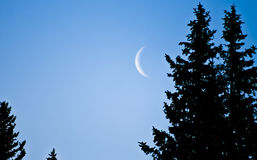 Crescent Moon. A crescent moon in the sky beside the silhouettes of evergreen trees Royalty Free Stock Image