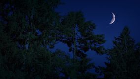 Crescent Moon Above The Forest At Night. Crescent moon in the night sky above the forest with the sounds of night animals stock video