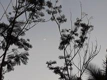 Crescent moon royalty free stock photo