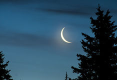 Crescent Moon at Night. Beside the silhouette of an evergreen tree Royalty Free Stock Photos