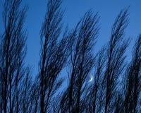 Crescent Moon Peeking Through as árvores fotografia de stock royalty free