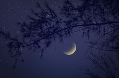 Crescent moon and stars with pine Royalty Free Stock Photo
