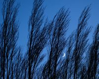 Crescent Moon Peeking Through the Trees royalty free stock photography