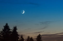 Crescent moonrise over trees. Stock Photo