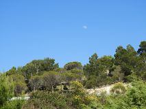 Crescent over a forest at day royalty free stock image