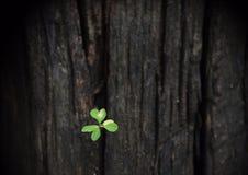 Crescere della pianta verde Fotografia Stock Libera da Diritti