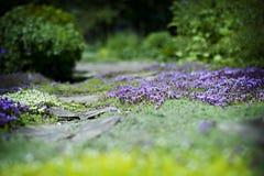 Crescimento à terra/flores da coberta Fotos de Stock