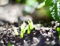 Crescimento Foto de Stock Royalty Free