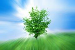 Crescimento abstrato Imagens de Stock Royalty Free