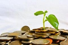 Crescimento acima Fotos de Stock