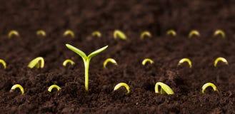 Crescimento alto Fotografia de Stock