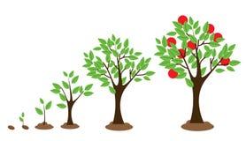 Crescimento da árvore ilustração stock