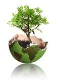 Crescimento da árvore da terra Fotos de Stock Royalty Free