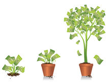 Crescimento da árvore do dinheiro Fotografia de Stock Royalty Free