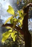 Crescimento da floresta húmida Imagens de Stock Royalty Free