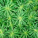 Crescimento da grama verde Imagens de Stock Royalty Free