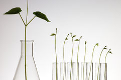 Crescimento da planta fotos de stock royalty free