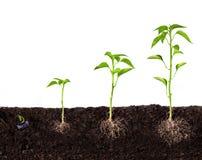 Crescimento da planta imagens de stock royalty free