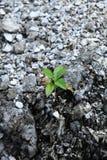 Crescimento da planta nova Imagens de Stock