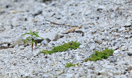 Crescimento da planta nova Imagens de Stock Royalty Free