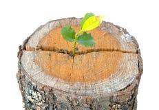 Crescimento da planta nova fotos de stock royalty free