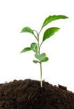 Crescimento da planta verde imagem de stock royalty free