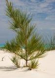 Crescimento da praia Fotografia de Stock