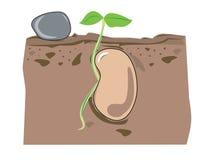 Crescimento da semente ilustração stock