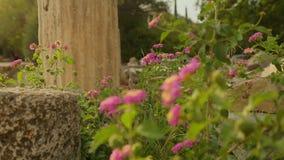 Crescimento das ervas daninhas e de flores em ruínas da construção abandonada, construção de deterioração filme