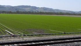 Crescimento de colheitas novo Fotos de Stock