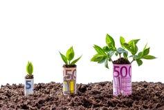 Crescimento de dinheiro do Euro em árvores Fotos de Stock Royalty Free