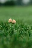 Crescimento de dois fungos Foto de Stock Royalty Free