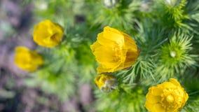 Crescimento de flor amarelo em um fundo da natureza filme