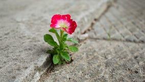 Crescimento de flor fora do concreto fotografia de stock royalty free
