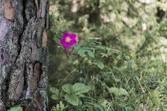 Crescimento de flor violeta ao lado da árvore Fotografia de Stock