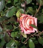 Crescimento de flores bonito em um canteiro de flores, um presente de aniversário imagens de stock royalty free