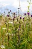 Crescimento de flores do campo no verão no país fotos de stock