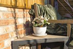Crescimento de flores em pasta fora em um pátio Foto de Stock Royalty Free