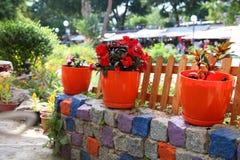 Crescimento de flores em uns vasos de flores alaranjados perto de uma cerca de madeira em uma parede de pedra multi-colorida Fotos de Stock Royalty Free