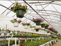 Crescimento de flores na estufa da folha do centro de jardim Fotos de Stock Royalty Free