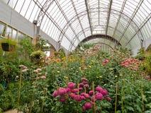 Crescimento de flores na estufa de vidro do centro de jardim Fotos de Stock